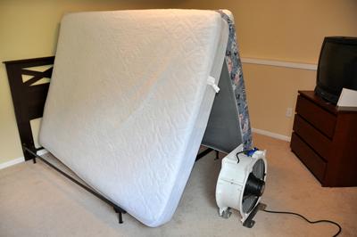 Bed Bug Mattress
