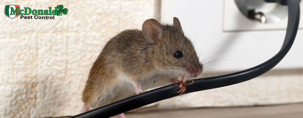 Rodent-Control-Services