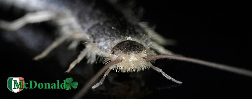 how-to-get-rid-of-silverfish
