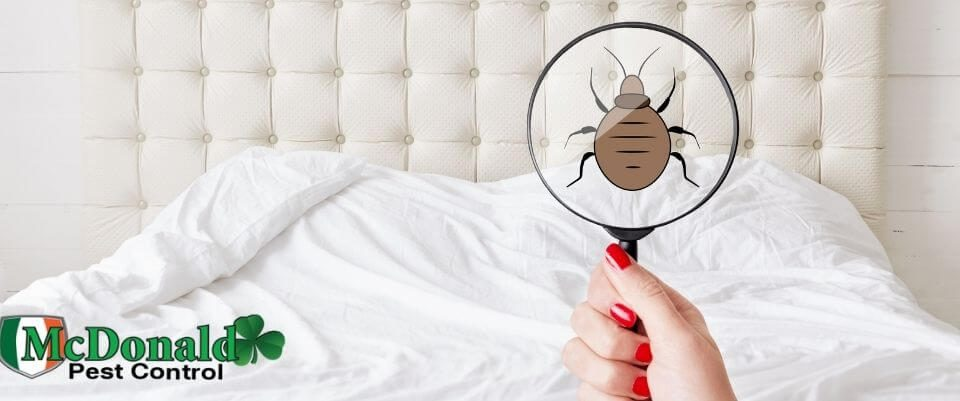 signs-of-bed-bugs