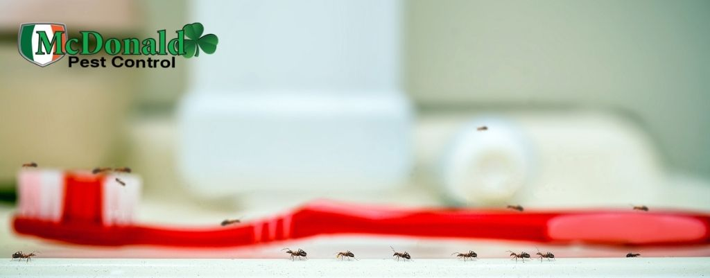 get-rid-of-ants-in-house