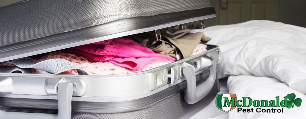 bed-bugs-in-luggage