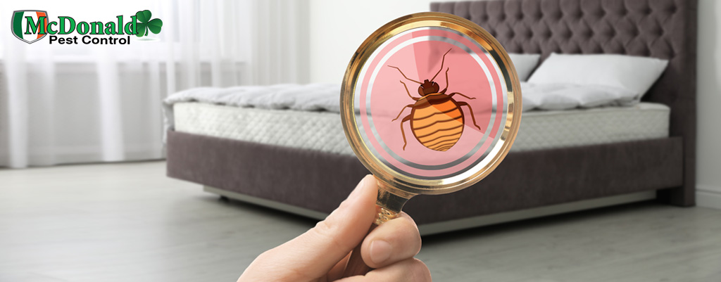 checking-for-bed-bugs