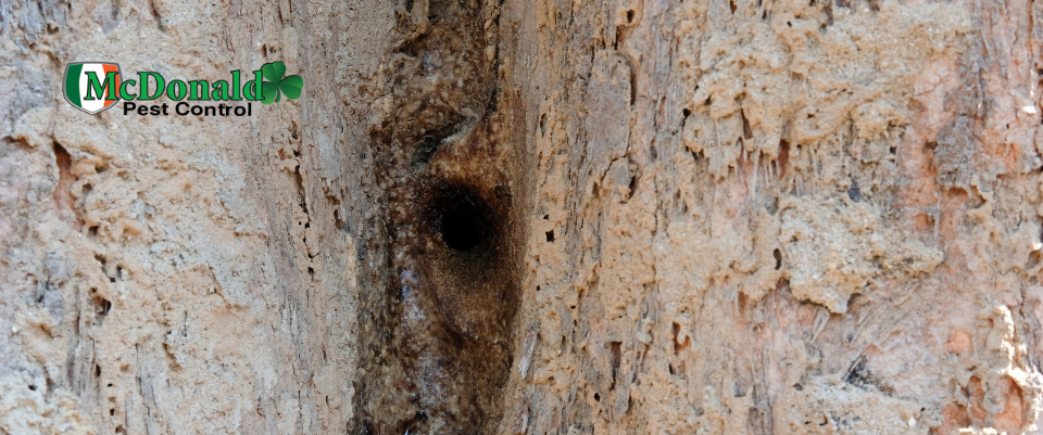 identify-insect-nests