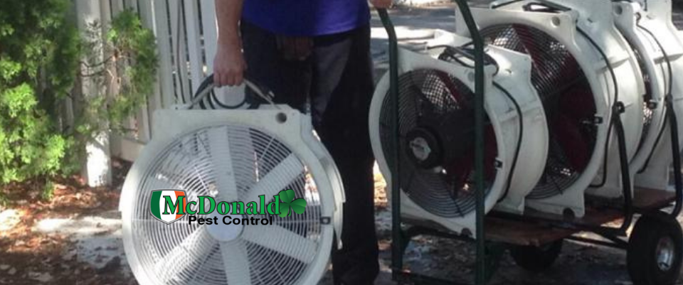 heating-treatment-for-bed-bugs
