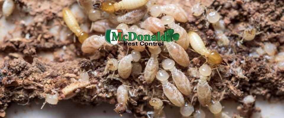 prevent-termites